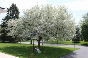 55Bridal Lace Norma Davis    Ontario County