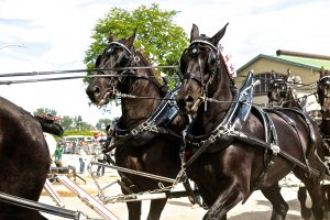 94 Horse TeamJudy Cook Onondaga County