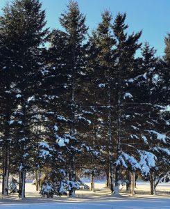 18 Syracuse Forest Jasmine Cole Onondaga County