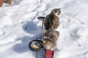 126 Kitten WagonAmber Mason Yates County