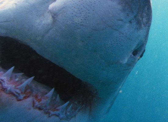 News-nova-sharksjpg