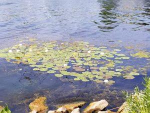 51Monet's Garden at Onondaga Lake Park  Diane Brickman  Onondaga County