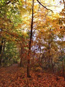 19Fall colors Chloe Wells-Burlingame Tompkins County