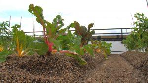 Roof_Farm
