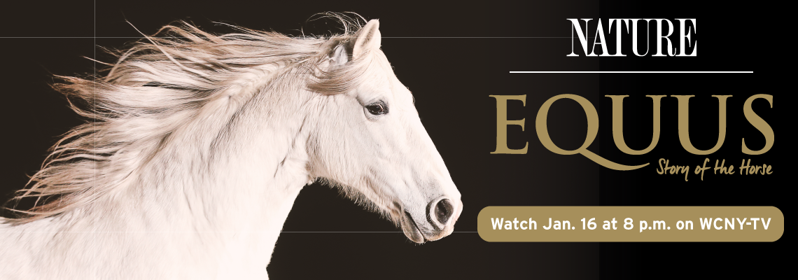 NATURE–Equus: The Horse Watch Wednesdays, Jan. 16 at 8 p.m. on WCNY-TV.