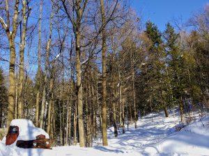86A Winters walk in New YorkJOSHUA W BRAVICKMadison County