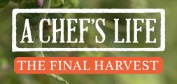 Widget_ChefsLifeHarvest-2