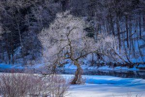 32Winter's FreezeMichelle EnrightCortland County
