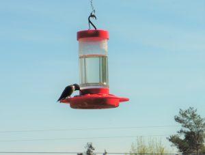 84Humming Bird feeding time Teresa Palmer  Tompkins County