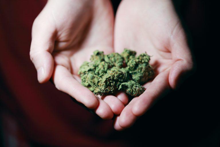 cannabis weed