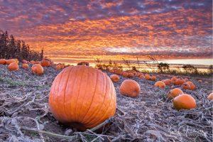 77Pumpkin SunriseJody Hildreth Oneida County