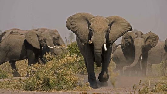 soul-of-the-elephant