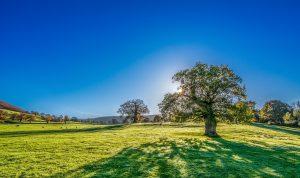 tree-2916763_1920