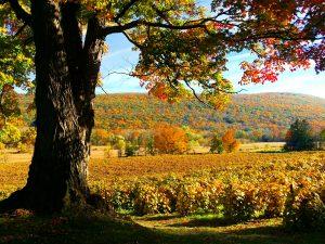 42Fall ColorsRita M. Goebert Ontario County
