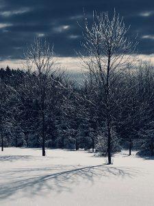 83 Winter morningElizabeth LaMay Madison County