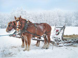 56Sleigh RideSandy RoeOnondaga County