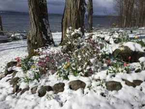 38Snowy Mother's Day flowers Debra Wiehl Oneida County