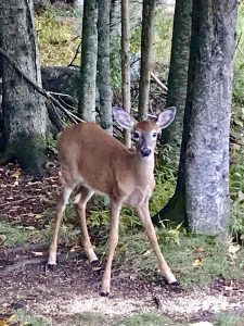 46 Babe in the woodsDenise White Cayuga County