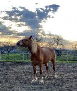 57Gorgeous Horse.Gorgeous SkyCharlena Janes Madison County