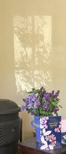 23Rose shadows and lilacsElizabeth Belden Handler Onondaga County