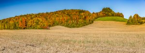 34Driving through fall Andrew Goldberg   Onondaga County