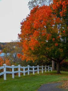 98 Path Along Seneca LakeMarshall Handfield Ontario County