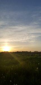 56Morning sun Jeremiah Mathewson  Cayuga County