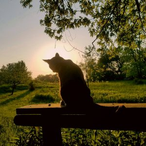 15Summer solsticePeggie Laws Onondaga County