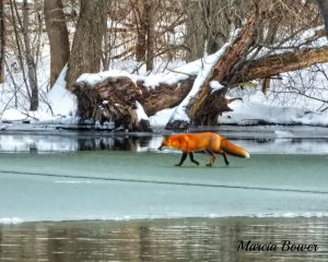 139 Gone ice Fishin'Marcia Bower Onondaga County