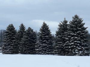 90 Winter PinesLeonora HAZLEWOOD Ontario County