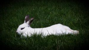 45Prince of RabbitsMeghan Stedman Onondaga County