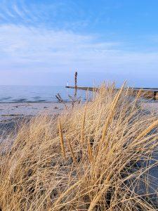 72Through the Beach GrassMeghan Fremouw Wayne County