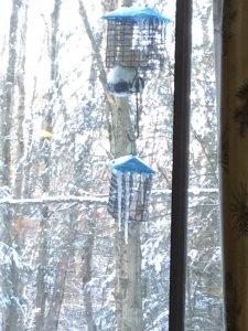 96 Winter feedSusan Brosnan Oswego County