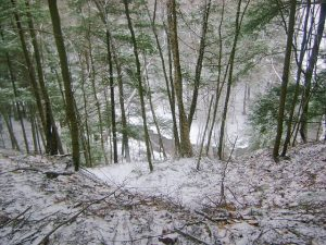 31A Walk in the WoodsJordan Hallak Oneida County