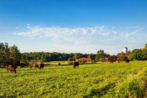63Sunday Morning Pastures Walt Mather Madison County