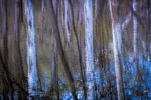 36 ReflectionsMichael SlaunwhiteOnondaga County