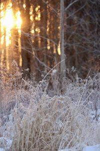30Morning SunriseJulie BarneyOneida County