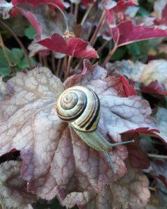 8 Summer SnailHolly Zinszer Onondaga County