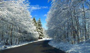 26Snow covered treesChris Mauro Onondaga County