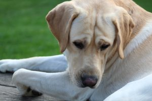 74 Dog days of SummerDonna Carelli Onondaga County