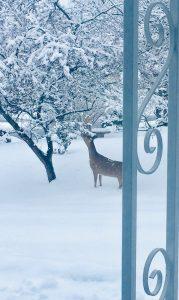 99 Deer by the TreeMary Beth W. DiMarco Onondaga County