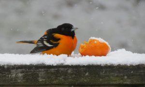 40Spring snow Lori Sherman Onondaga County