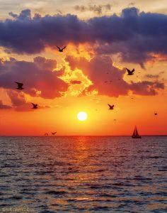 29Seagulls/ Sailboat/ SunsetSusan Campbell Oneida County