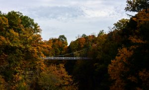 38 Fall in the Fall Creek Gorge Mark Avery Tompkins County