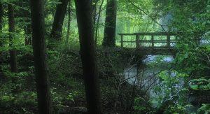 59Bridge at Green Lakes  Anne Messenger   Onondaga County