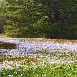 85Baby Blue Woods Susan Miller   Oneida County