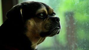 45 The Curious Pup Austin Smallwood Onondaga County