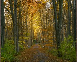 55A Walk in the Autumn WoodsDavid Spaulding Tompkins County