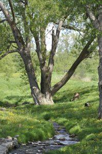 16Summer Field  Linda Chapman  Onondaga County