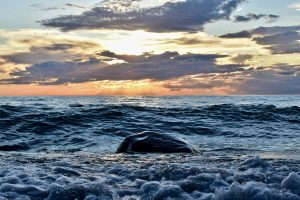 33Sunset on Lake Ontario Andrew Byrne   Cayuga County